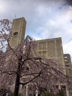 世界平和記念聖堂と桜2014.jpg